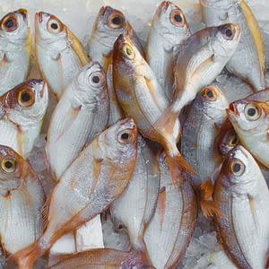 Peixe na alimentação saudável